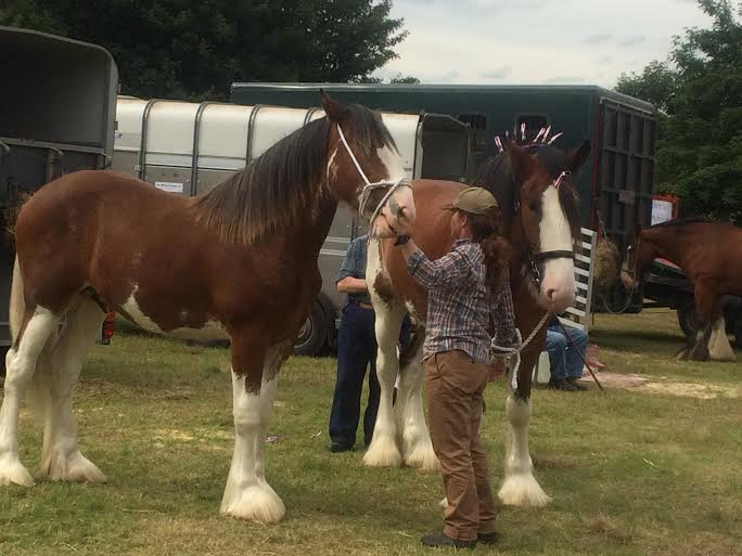 KINROSS-show-2015-horse-clydesdales