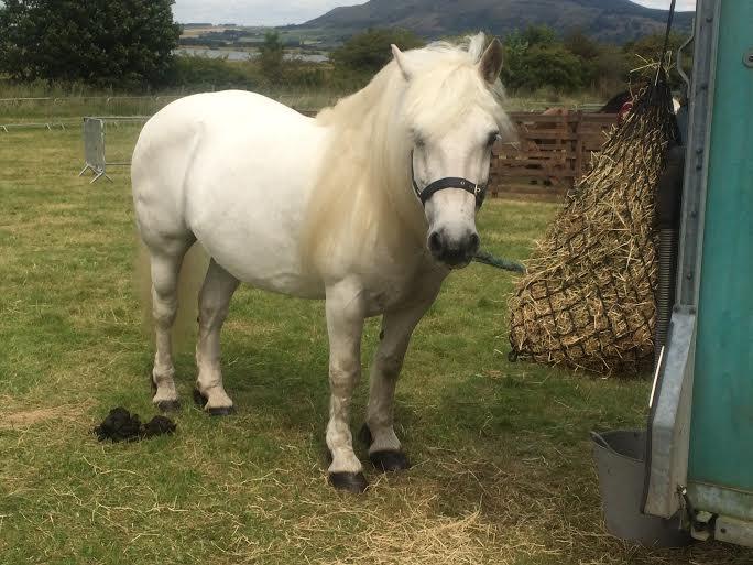 KINROSS-show-2015-horse-highland