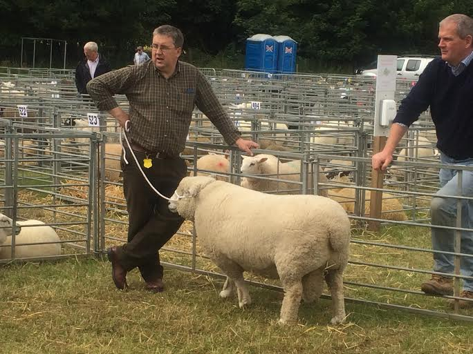 KINROSS-show-2015-sheep-ryeland
