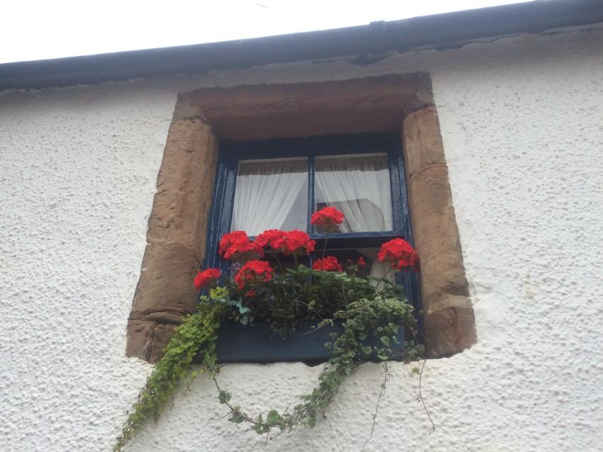 CRAIL-2016-sept-window-flowers