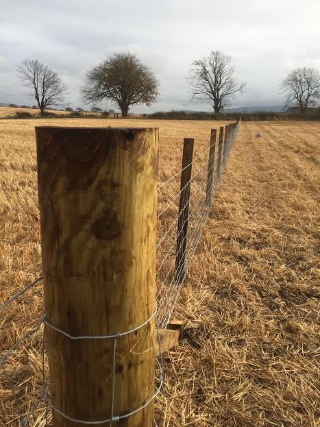 SPARROW-2016-nov-strainer-fence