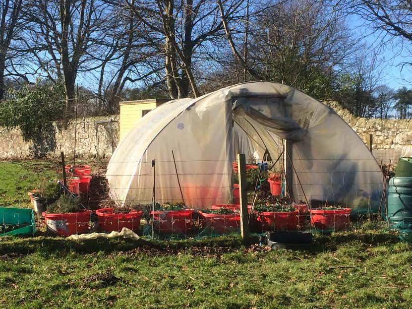 garden polytunnel with tubs outside and in
