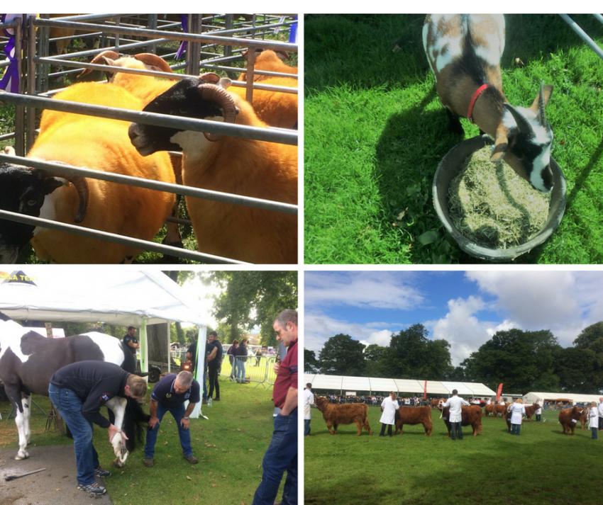 perth show livestock