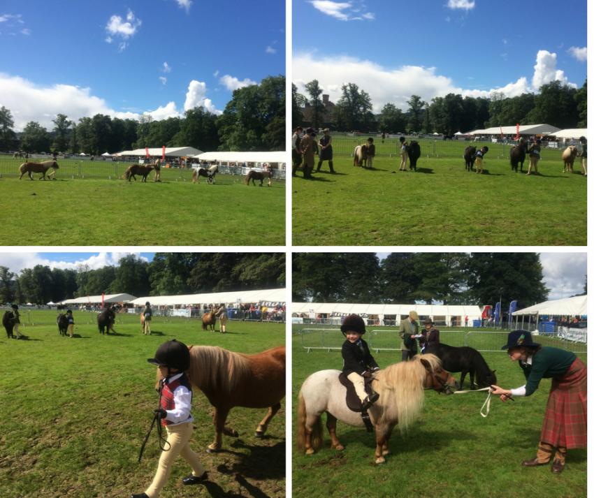 Shetland ponies, Perth Show