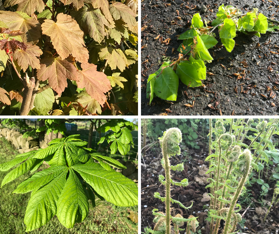 four photos of green leaves