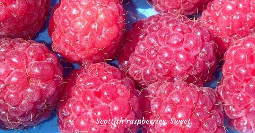 ripe plump pink Scottish raspberries