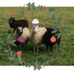 humorous festive blog from Scottish smallholding